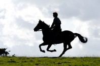 Caballo de Guerra de Steven Spielberg War Horse