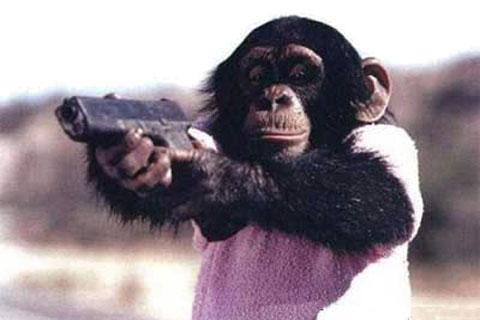 Toma chango tu pistola!