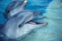 Los Delfines Magnificas criaturas