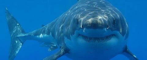 shark night 3d va hacer los mismo que piraña 3d pero con peces más grandes