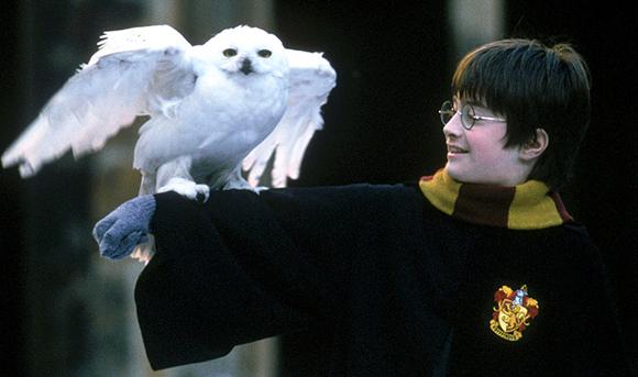 Hedwig la lechuza de quien ya nadie se acuerda