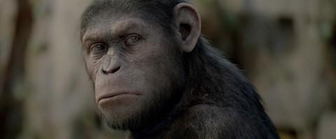 cesar rise apes