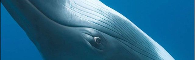 beached ballena azul