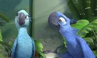 rio jewel y blu