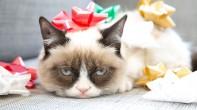 grumpy cat pelicula