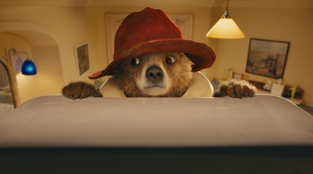 oso adorable paddington